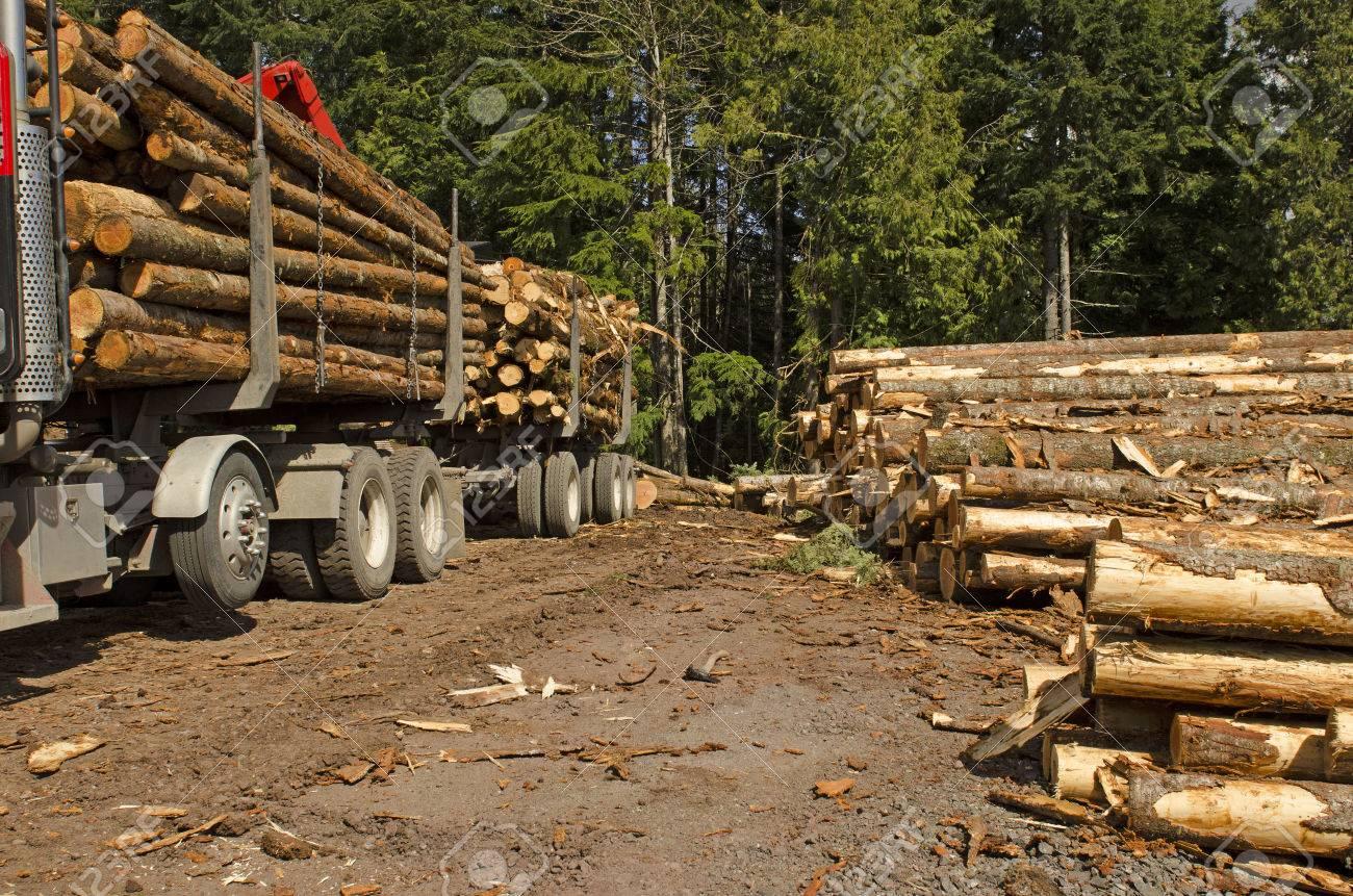 30836254-una-mquina-de-gra-forestal-o-silvicultura-carga-un-camin-de-registro-en-el-sitio-de-aterrizaje-con-el-cond